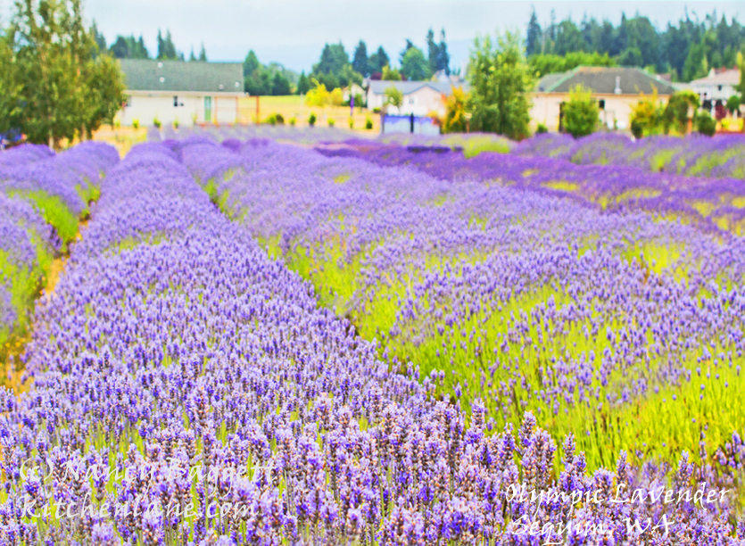 Resources - Lavender Farms listed alphabetically by state