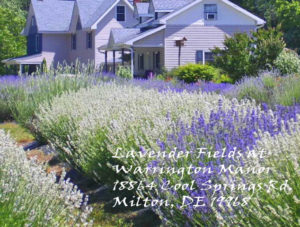 Lavender Farms Are Ready for Your Visit - Nancy's Lavender Place